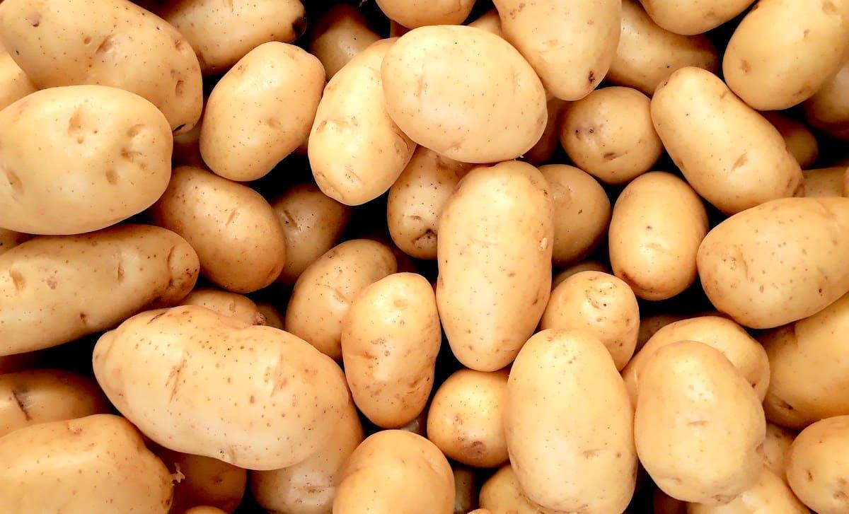 Diversas batatas mostra a produção no Brasil