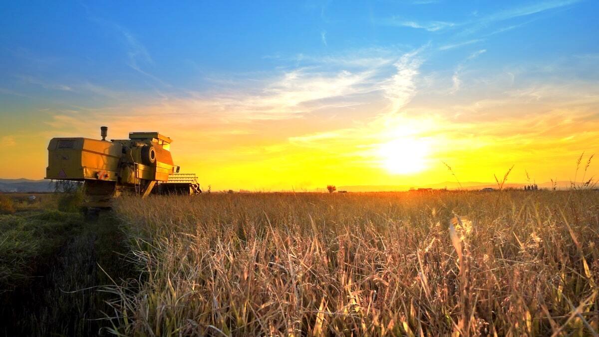 Máquina agrícola realizando colheita no fim de tarde
