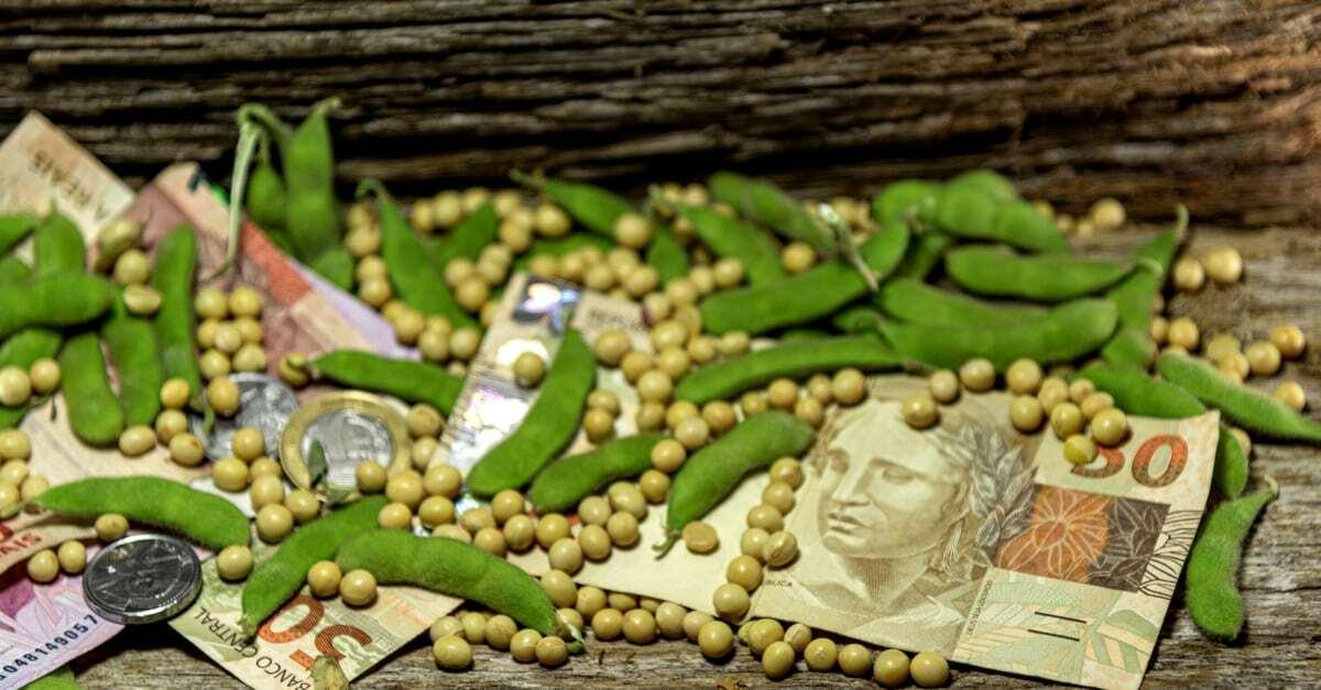 Grãos e vagens de soja entre cédulas e moedas
