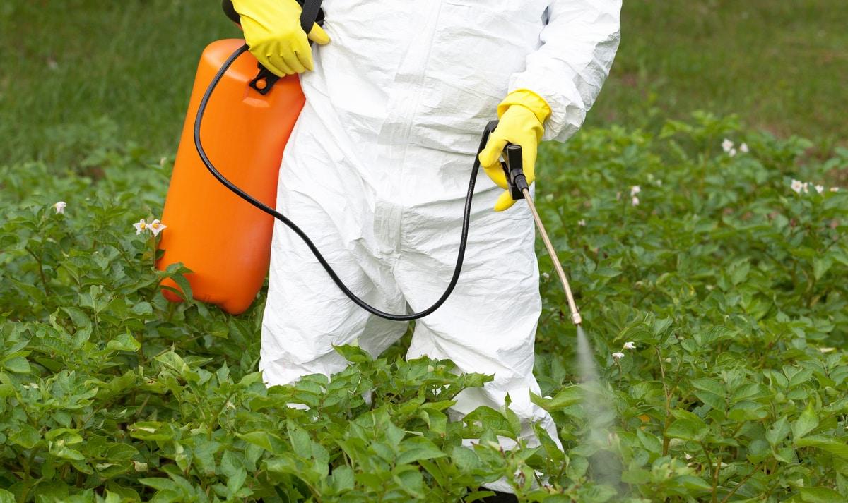 Homem aplica herbicida numa plantação