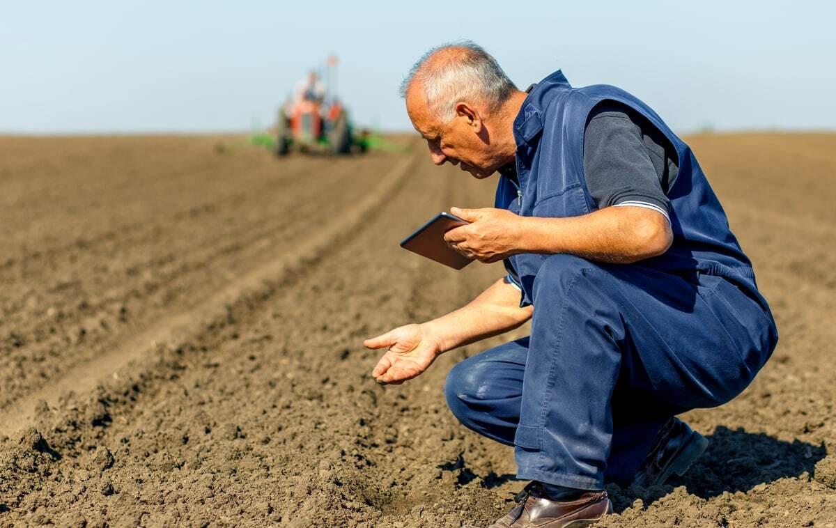 Agricultor analisa as sementes plantadas no solo
