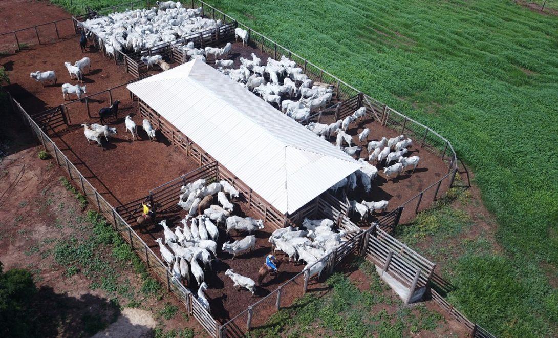 Curral de gado: como montar em sua propriedade