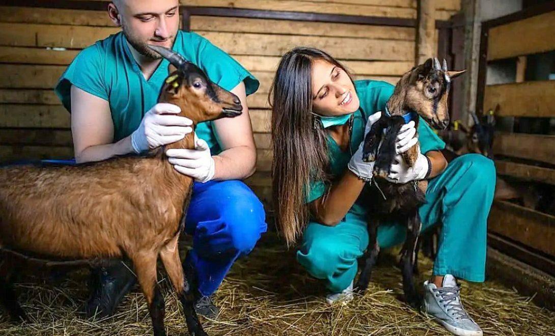 Médico veterinário: importância para a economia rural