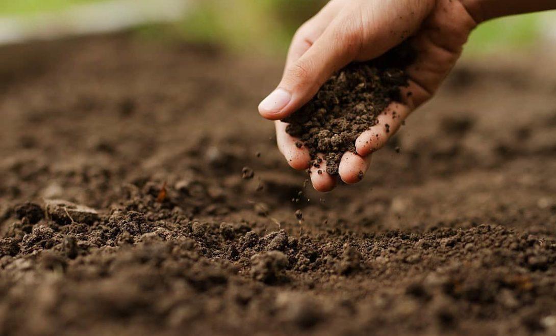 Conheça os principais tipos de solo para plantio