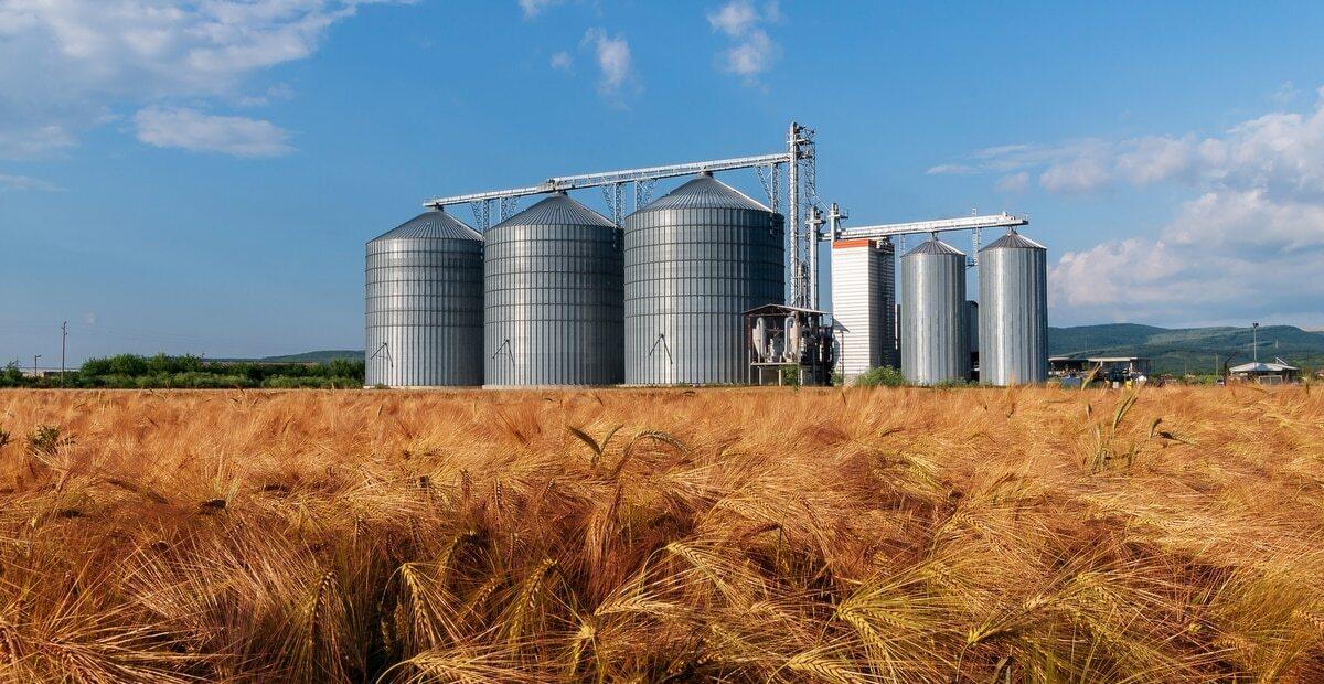 Plantação de trigo com silo de grãos ao fundo