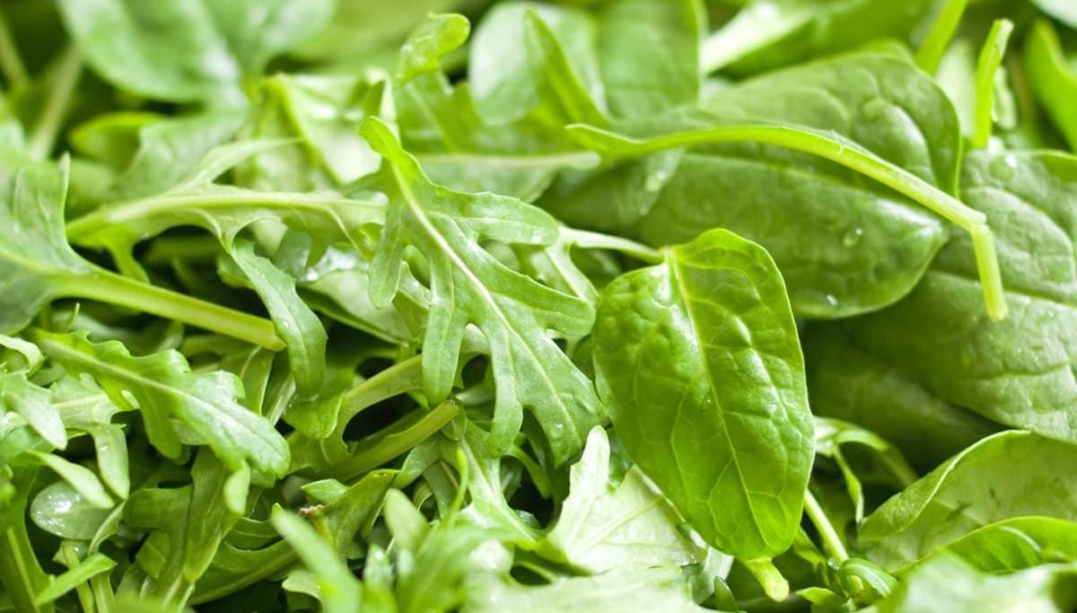 Folhas de rúcula baby leaf