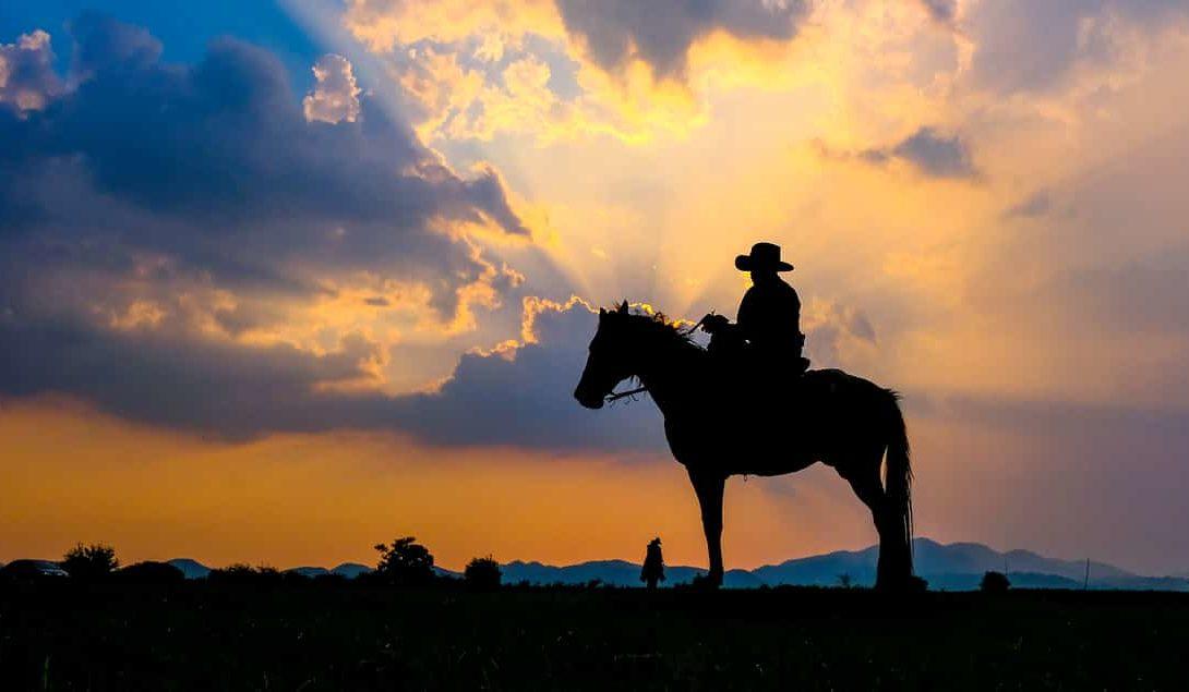 Cavalo para lida diária: confira quais são as características