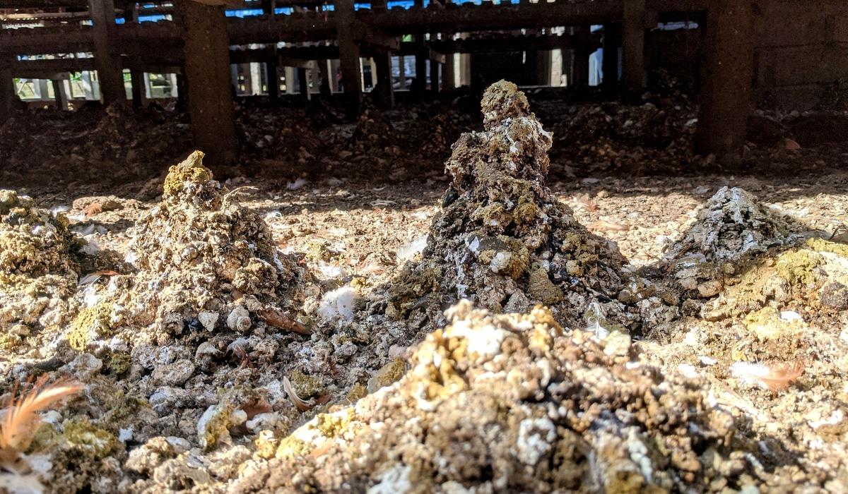 Montes de esterco de galinha retirados de granjas