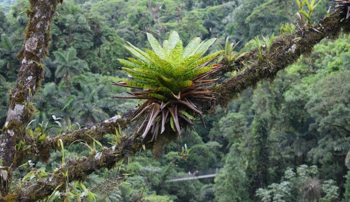 Espécie de plantas epífitas no tronco de uma árvore