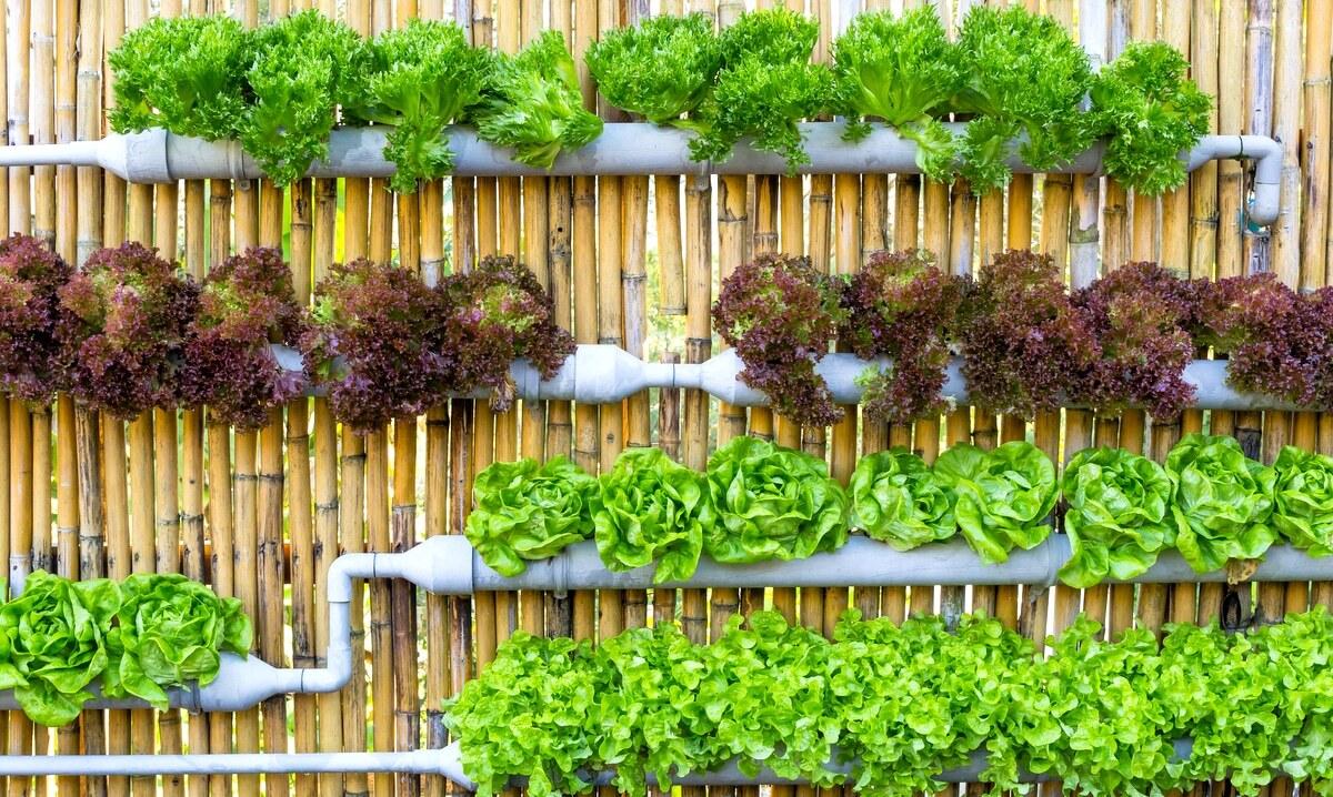 Horta feita com canos de PVC