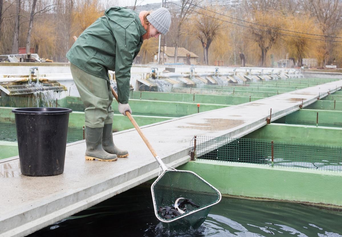 Piscicultora segura rede com vários peixes