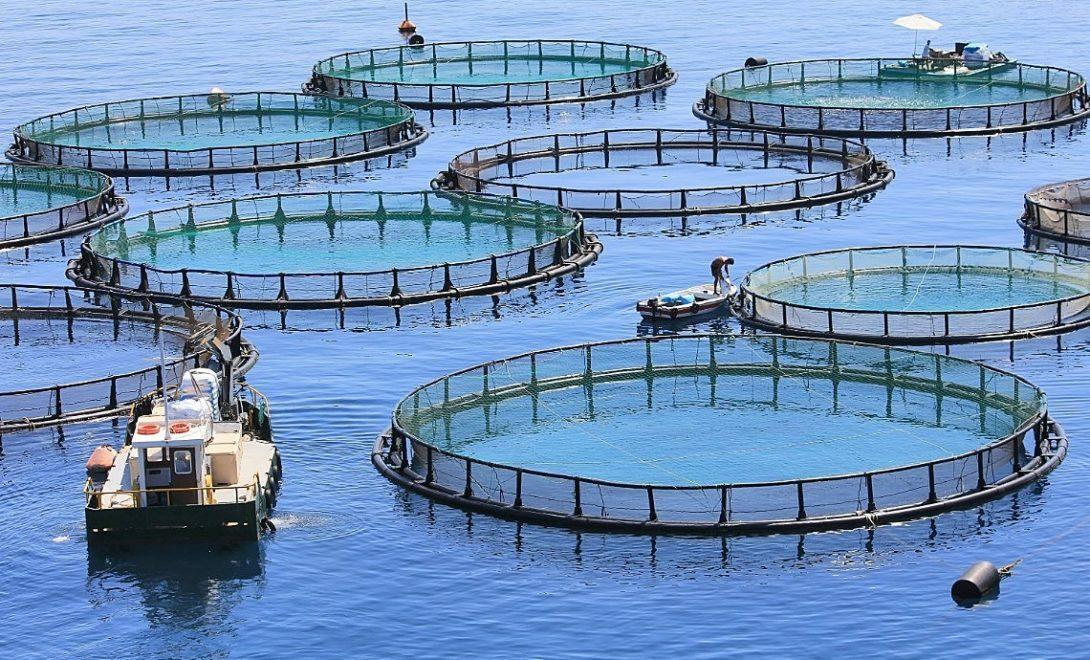 Mercado de piscicultura em expansão. Veja como investir!