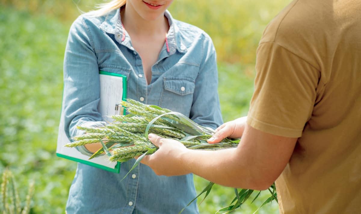 Homem mostra qualidade do produto agrícola a ser vendido
