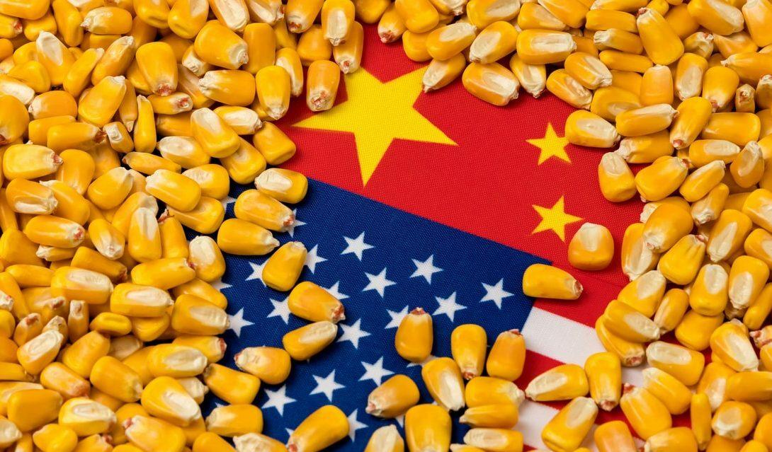 Principais regras para importação de sementes