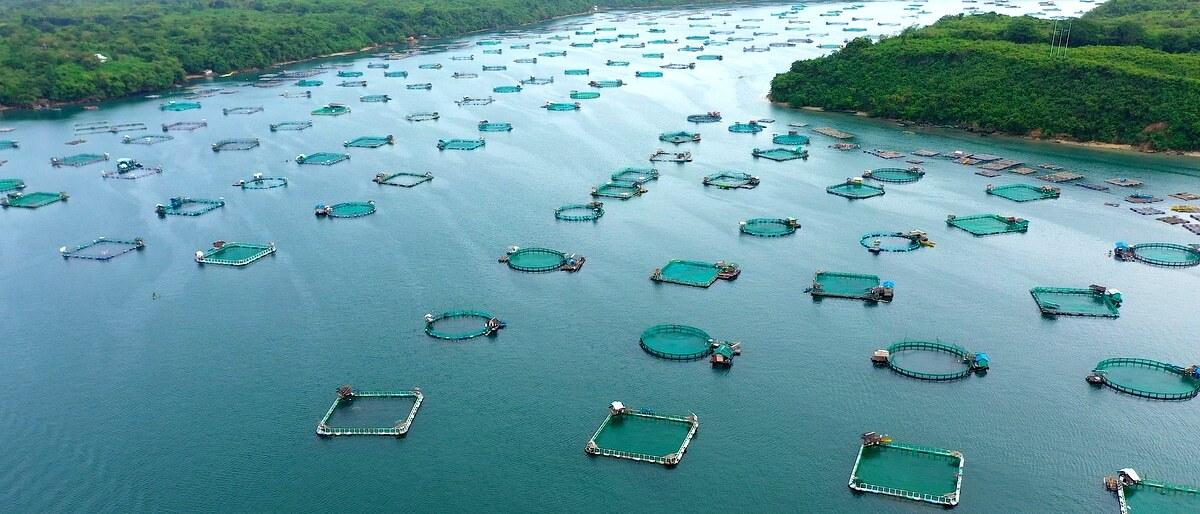 Dezenas de tanques-rede de peixes em rio