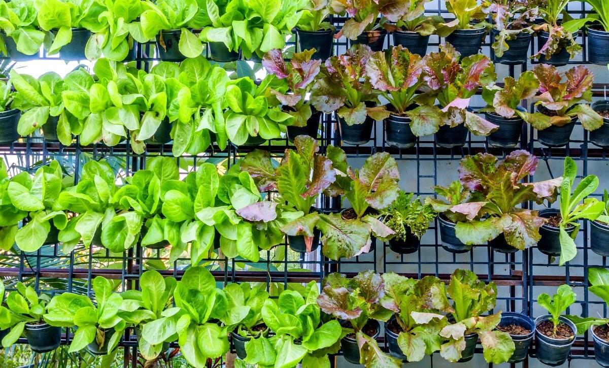 Horta vertical com plantio de diversos vegetais