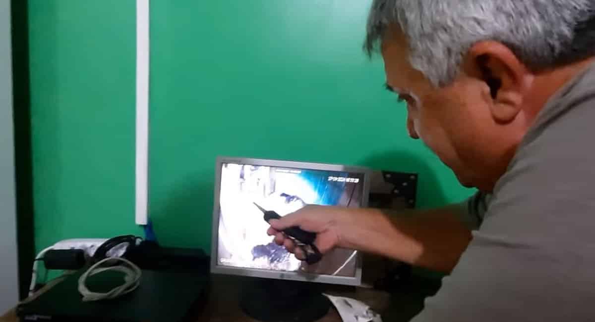 Dono do galo mostra imagens dele botando ovos