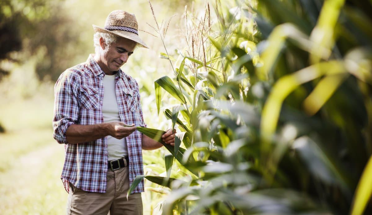 Produtor analisando sua lavoura, após seguir recomendações do zoneamento agrícola