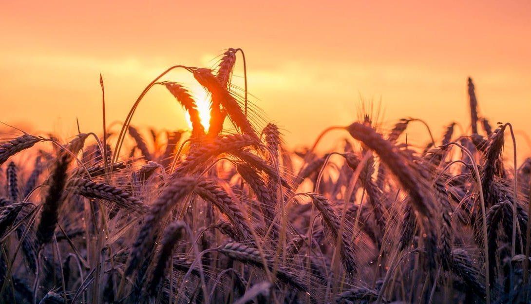 Agronegócio e sua importância para o Brasil