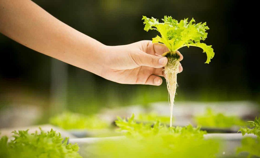 Como fazer uma horta hidropônica