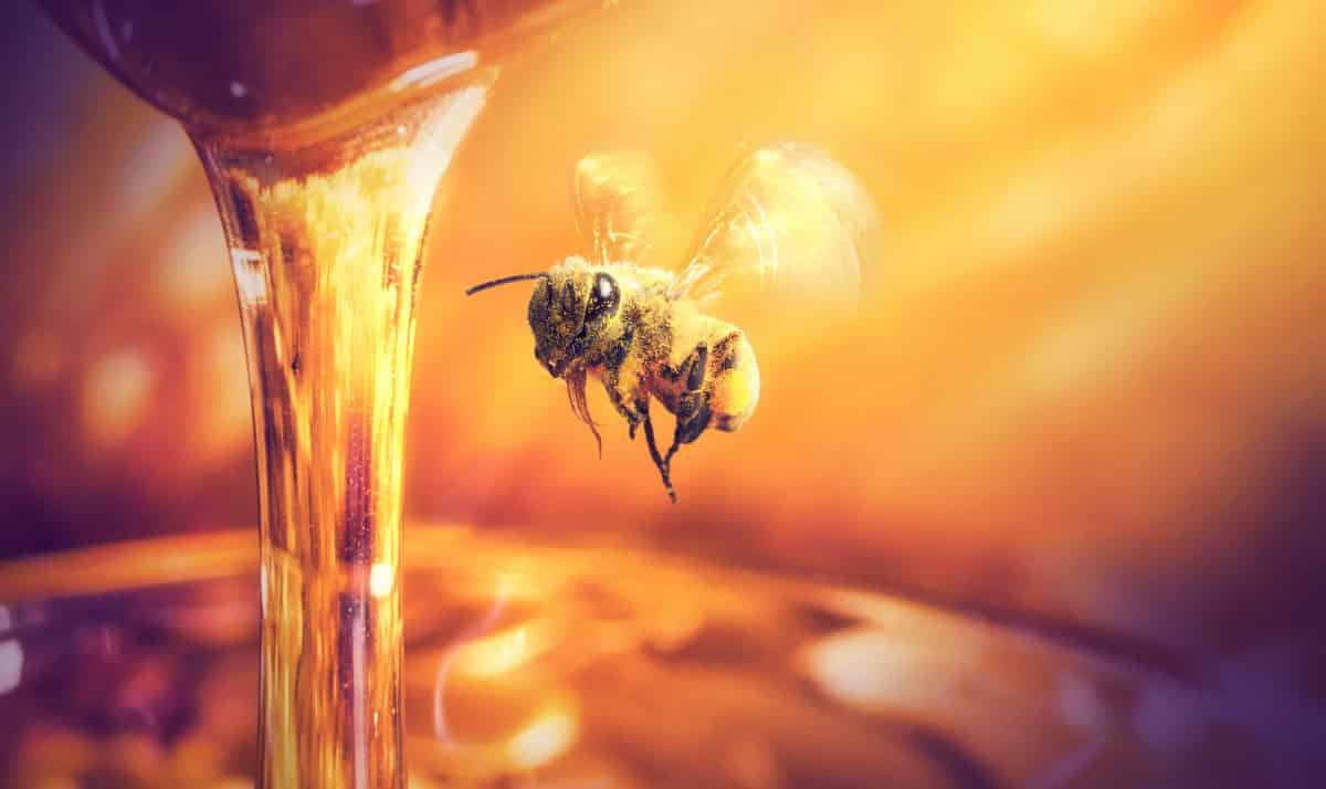 Mel que foi produzido pelas abelhas