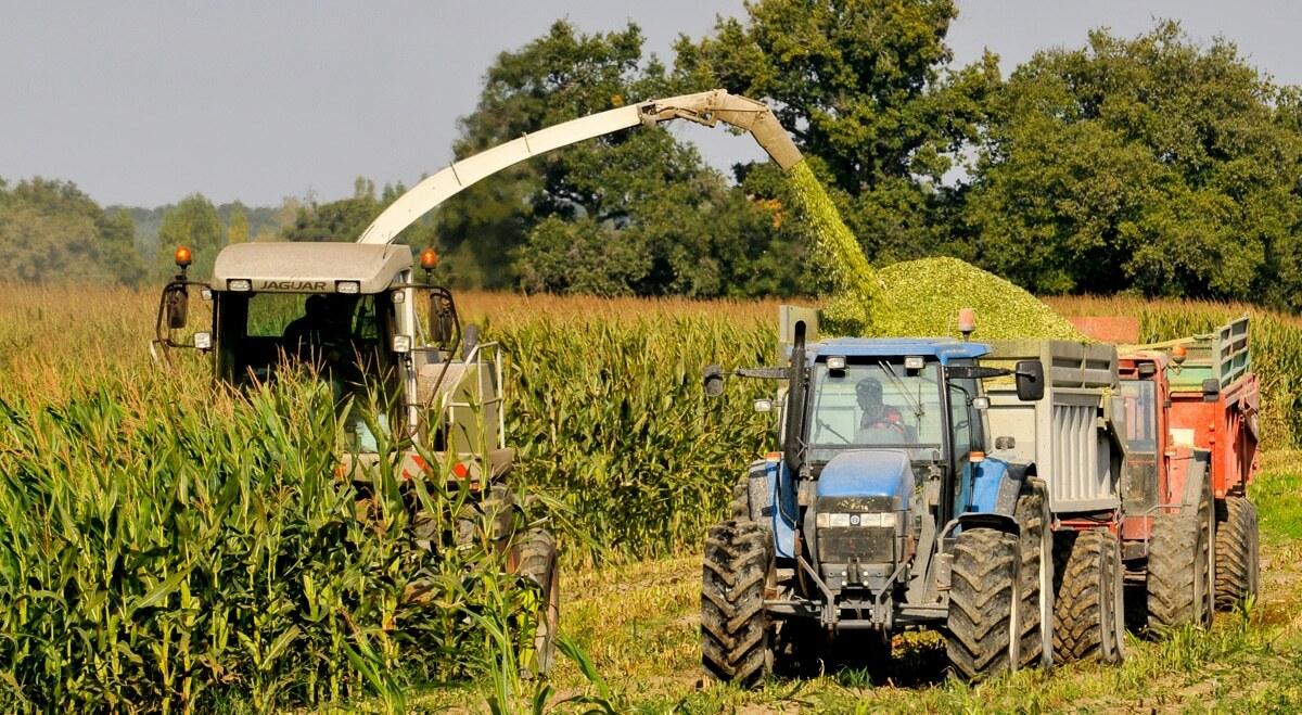 Colheita de milho para produção de silagem