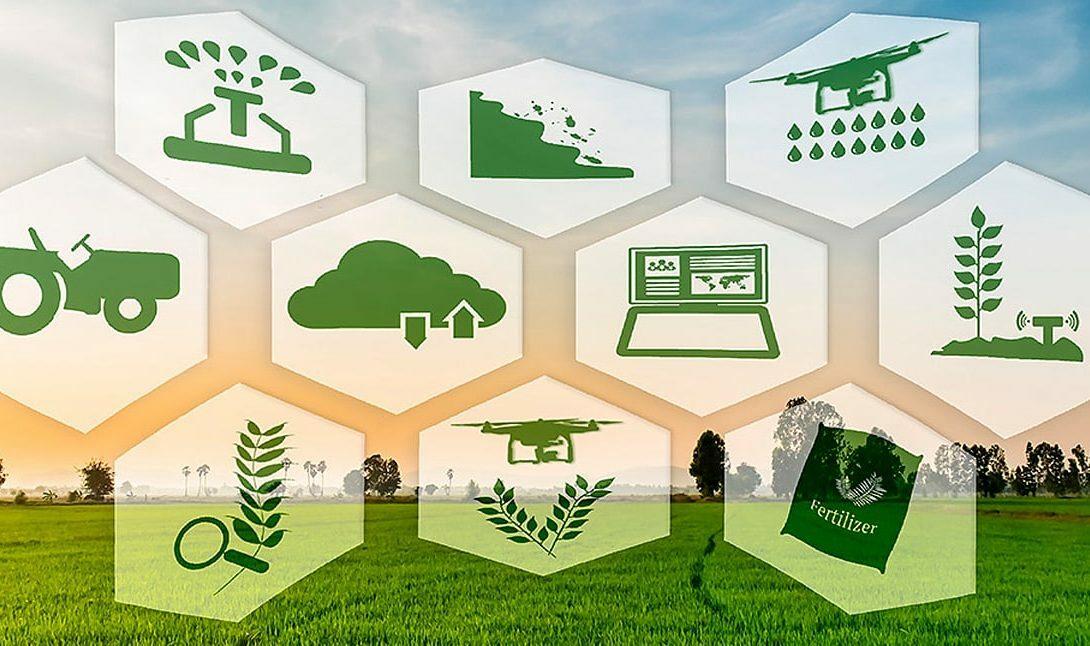 Gestão para certificação de qualidade agrícola