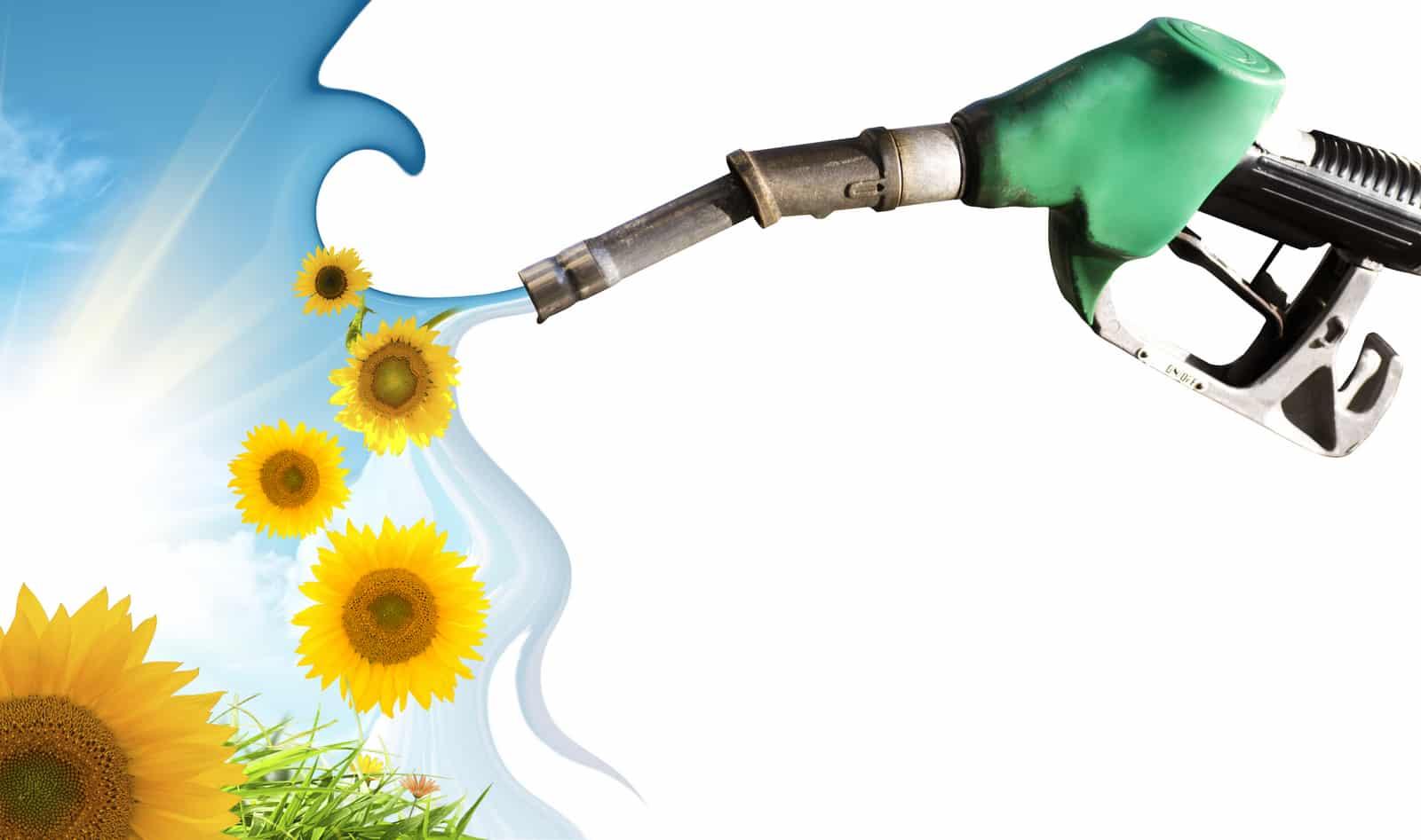 Biodiesel produção com girassol