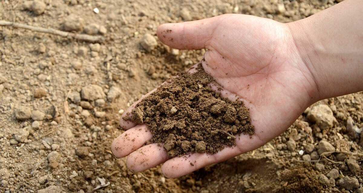 Solo com aplicação de fertilizantes organominerais