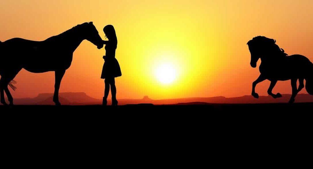 Bem-estar e a economia na criação de cavalos