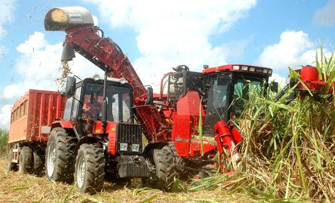 Como reduzir as perdas na colheita de cana