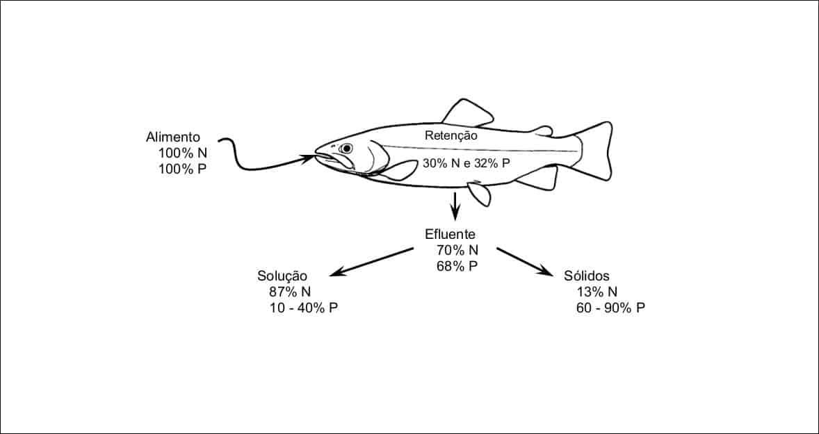 Arte mostrando detalhes da nutrição do salmão.