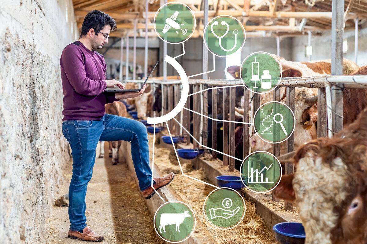 No mercado da pecuária é preciso investir em tecnologia.