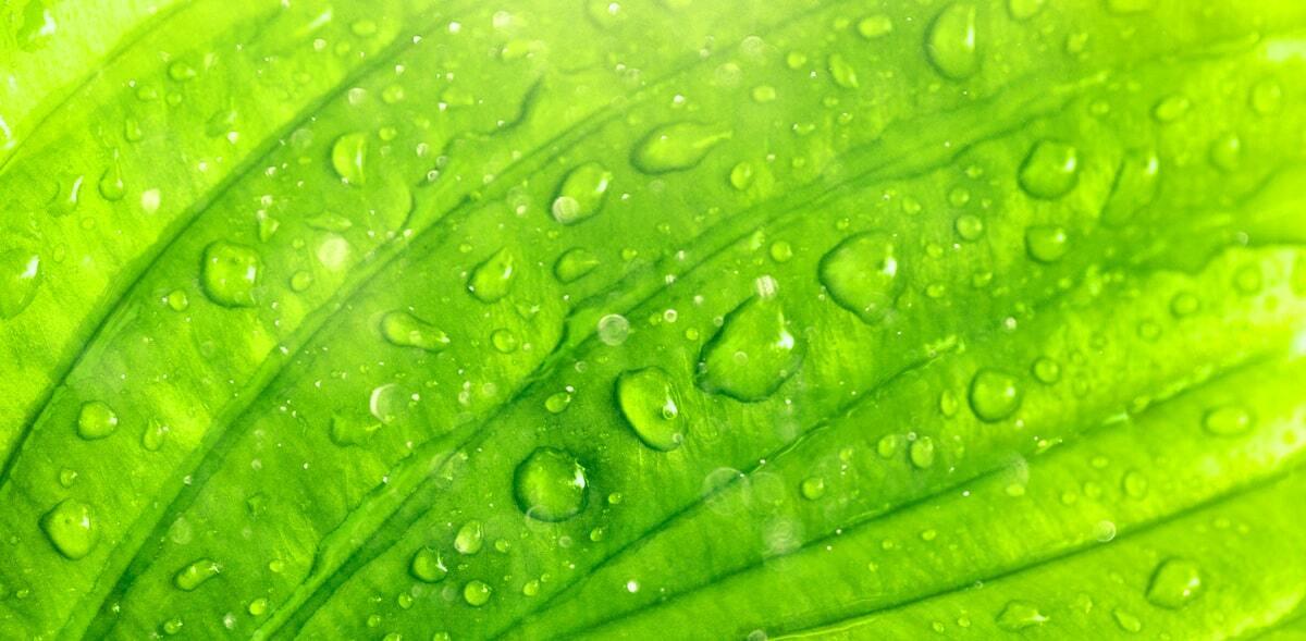 Processo de fotossíntese para uma planta sadia.