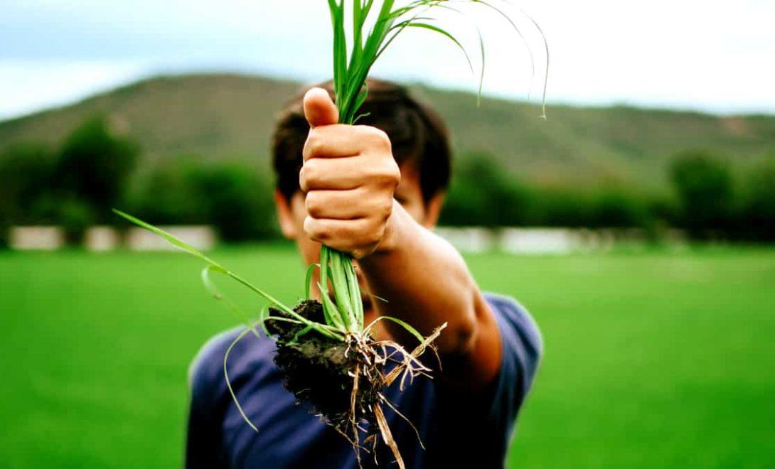 Plantas daninhas: confira as mais comuns na agricultura