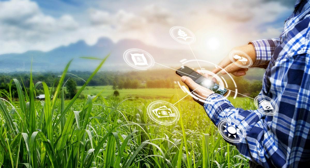 Informações sobre a atividade agrícola no celular