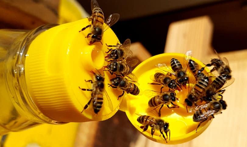 Alimentação de abelhas feita a partir de xarope