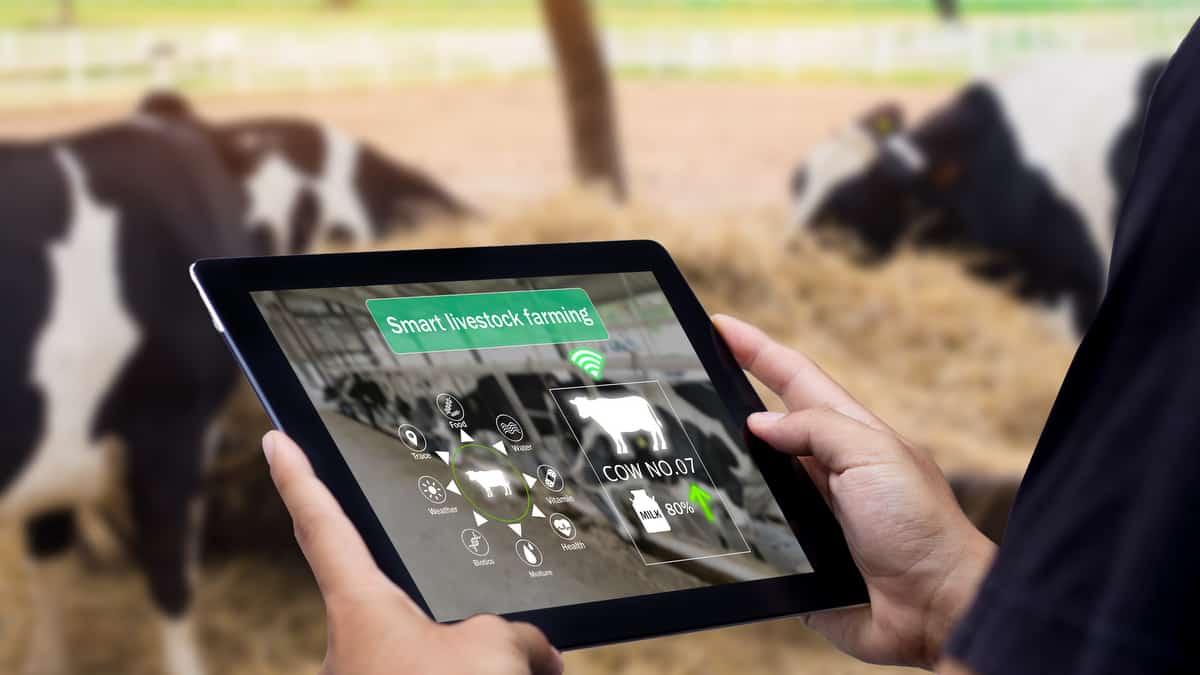 Pecuarista acompanha pelo tablet informações graças a identificação eletrônica de bovinos.