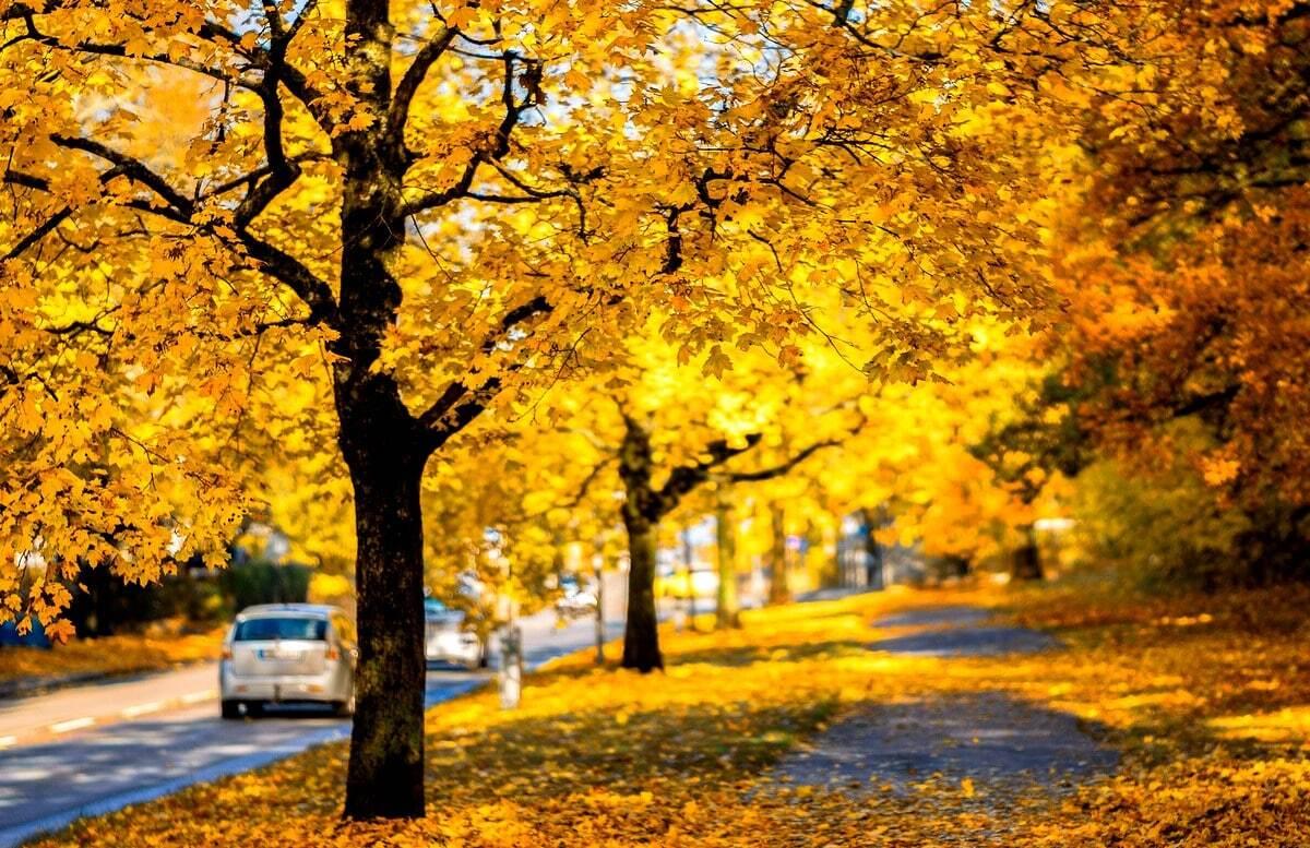 Plantio de ipê amarelo em via pública