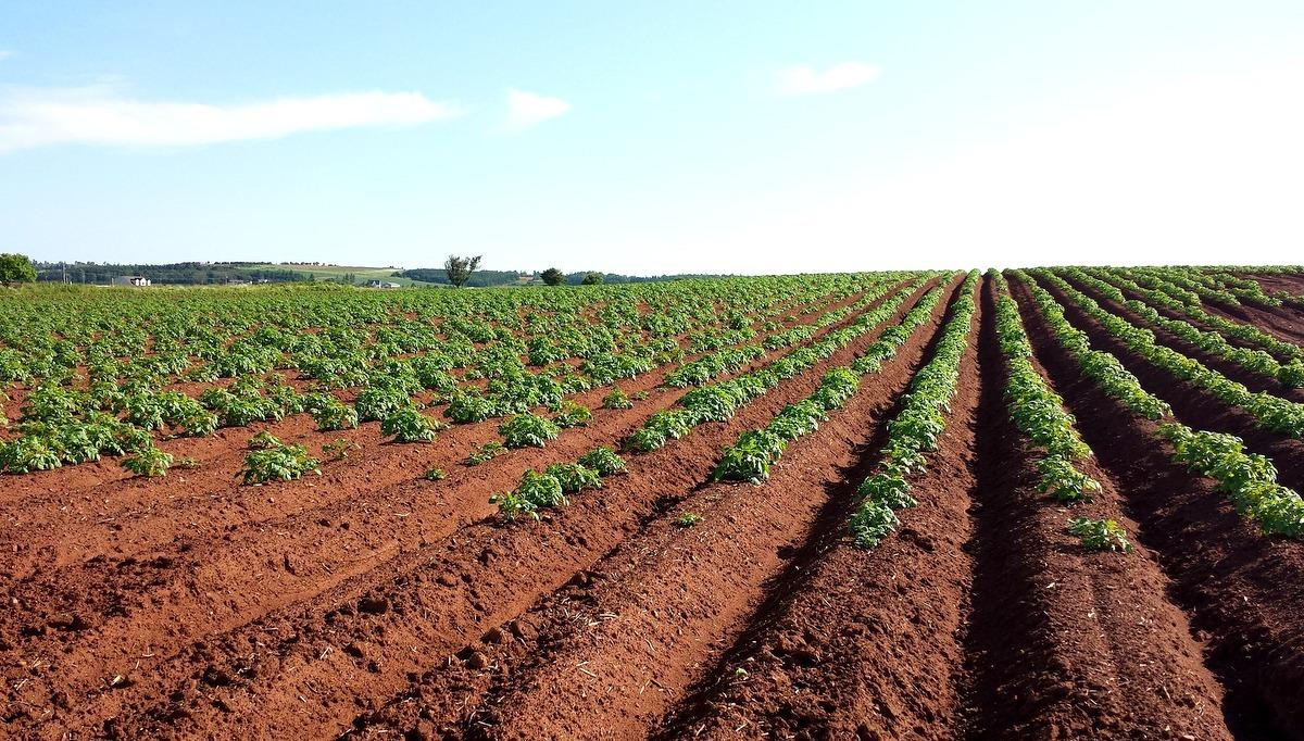 Nutrientes entregues ao solo pela gessagem