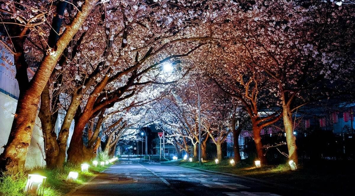 Iluminação individual em árvores na rua