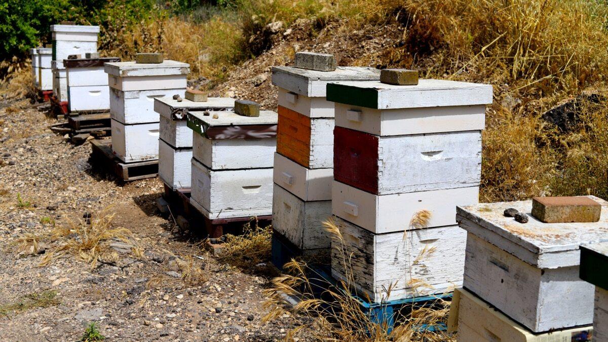 Apiários proteção das abelhas contra as formigas