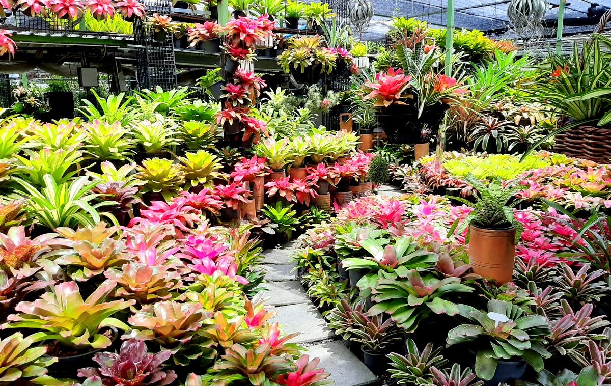 Jardim com plantio de bromélias