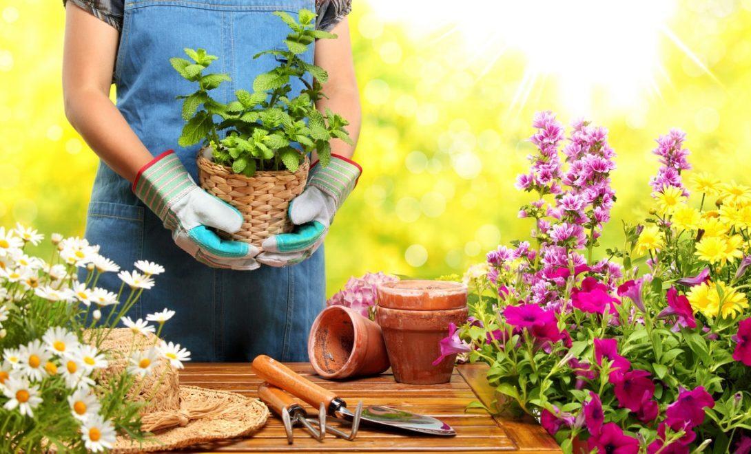 Plantas para jardim: descubra as melhores para sua casa