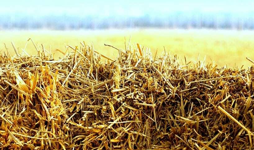Herbicida na palhada em plantio direto
