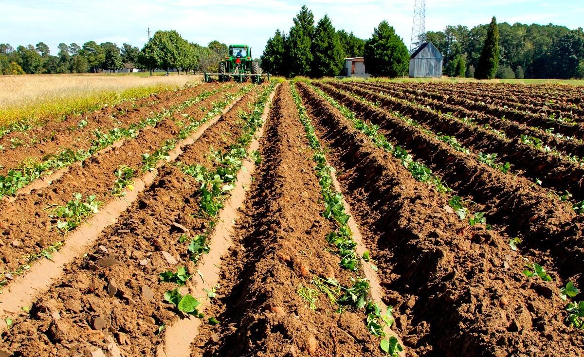 Cuidados com o solo para plantio