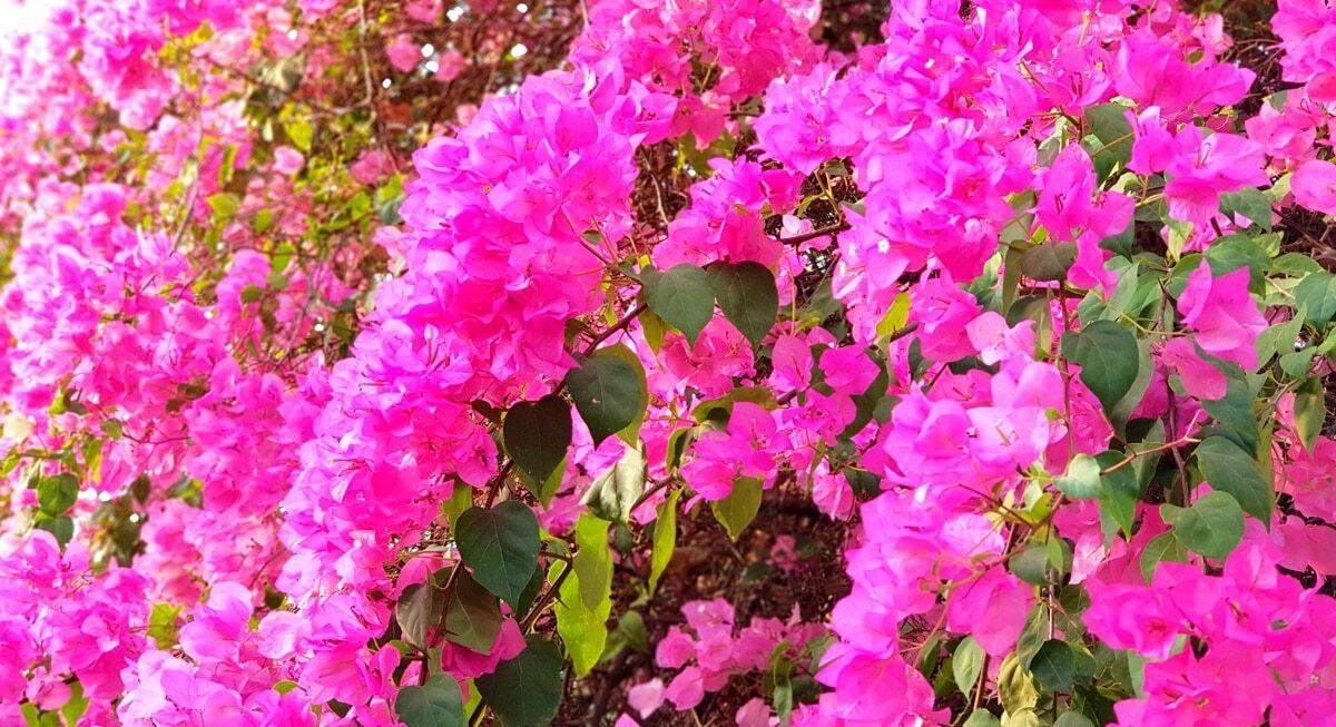 Primavera como opção de plantio