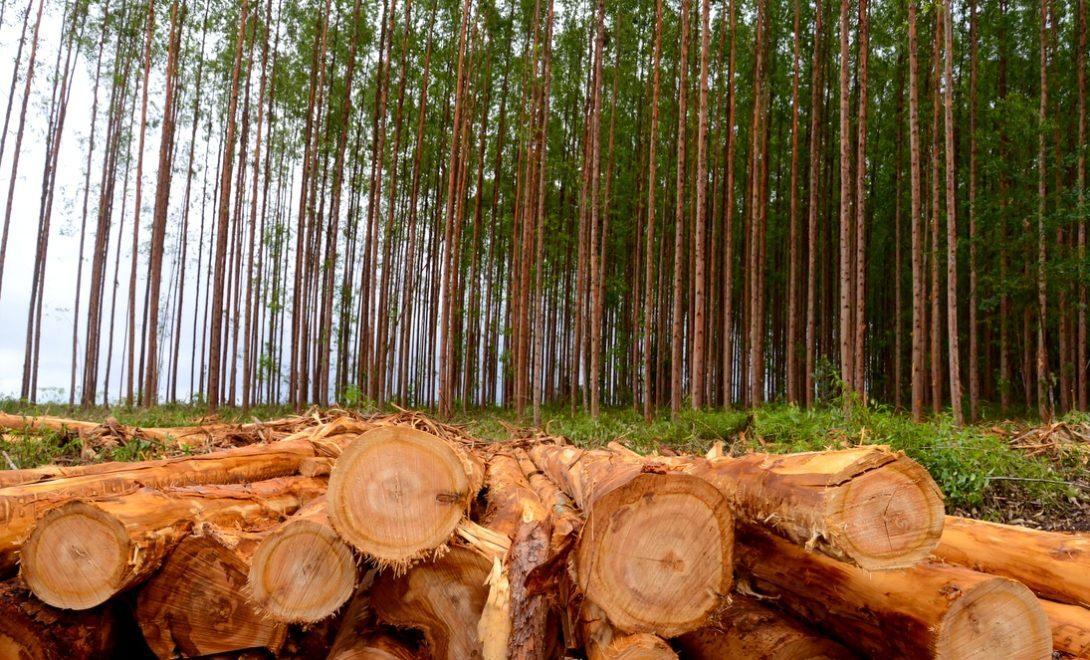 Tratamento da madeira de eucalipto: como é feito e para que serve!