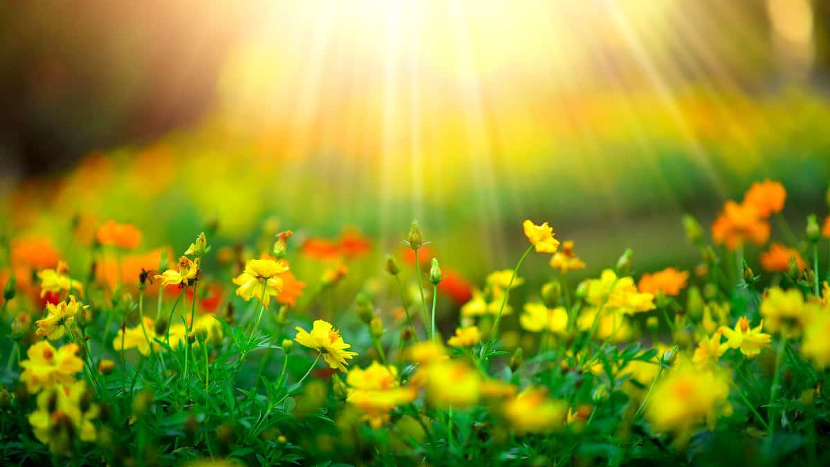 Jardim florido com sol pleno