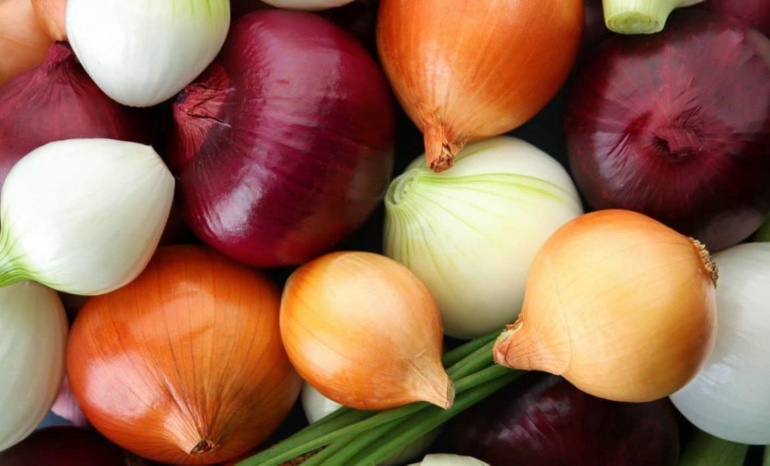 Cebola: descubra tudo sobre essa hortaliça